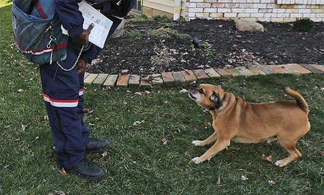 狗狗为什么针对穿制服的人?特别喜欢吠叫快递小哥和保安?