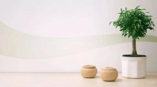 卫生间不用管也长得很好的8种植物,懒人也能养很好