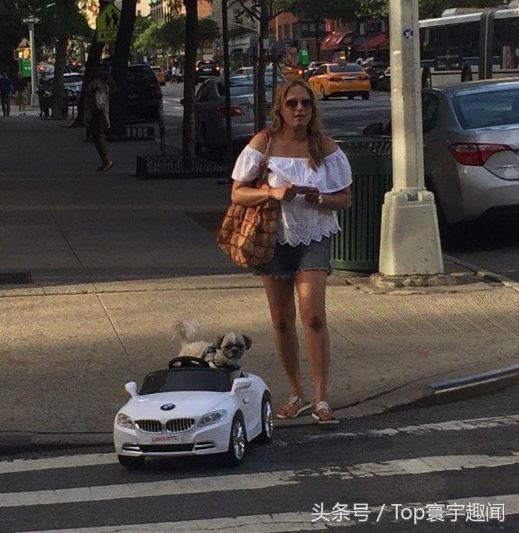 女子和自己开宝马的宠物狗