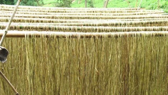 种植苎麻需深耕整地,重施基肥,加强田间管理安全越冬苎麻耕作层