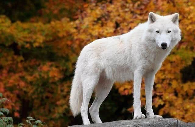 10种在近代已灭绝的动物,珍惜保护好现有的动物