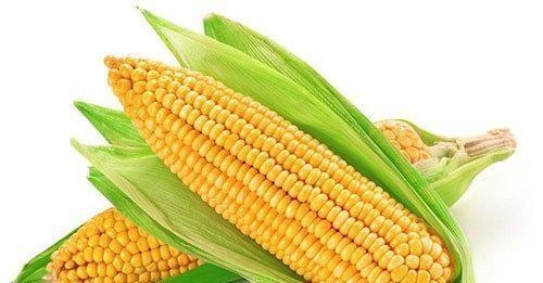 早餐只吃一个玉米好吗?许多人忽略了玉米的功效,那是你吃亏了