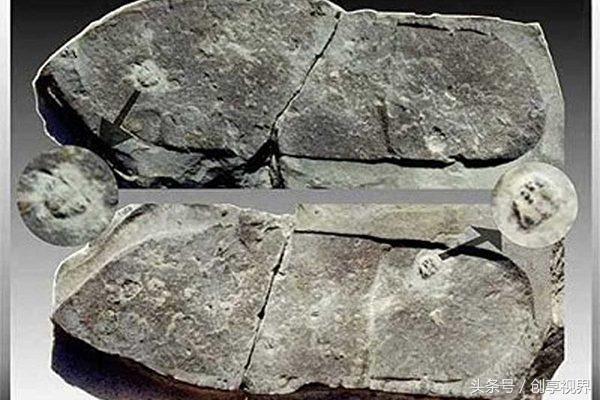 女生识宝美年前发现4.7亿化石三叶虫少女天津大学的外国语慧眼图片