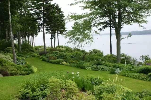 家庭园艺|欧式风格庭院景观设计--常用植物总结