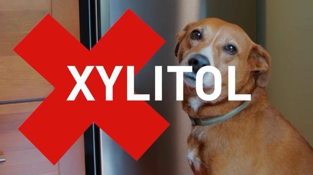 狗狗可以吃口香糖吗?宠物医生会告诉你,其中的木糖醇要狗狗的命