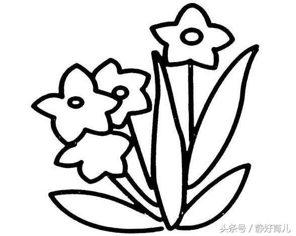 水仙花的简笔画画法步骤 怎么画水仙花
