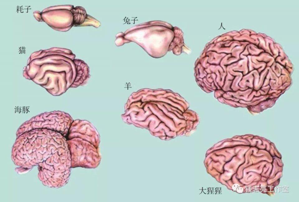 青蛙解剖图手绘