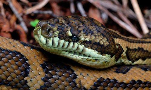大蛇视频天吓跑竟开后进屋说话村民歌曲孙悦雷雨图片