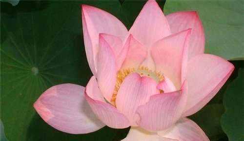 佛家感悟人生的经典禅语看完让你受益匪浅!