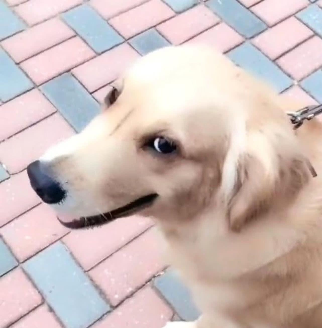 <b>狗子拉出红色的便便,主人被吓了一坏,等走近一看却一脸尴尬!</b>