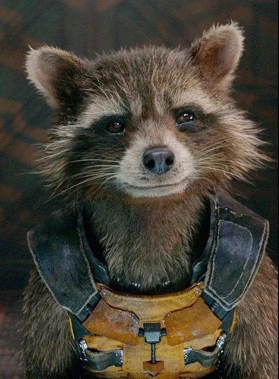 《复仇者联盟3》里的火箭浣熊原来是这样技多不压身的
