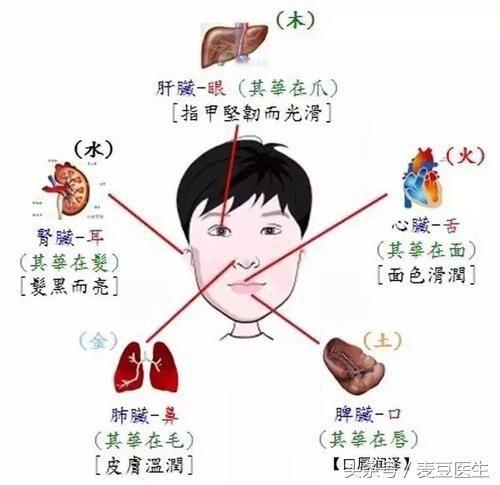 也就是说,人体五官与五脏之间存在着密切的联系,人们可以通过观察五官