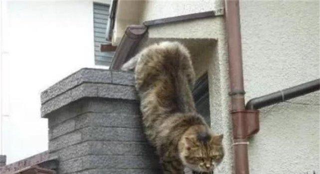 猫咪脚踩高墙铁钉过路,原因只为见心爱猫,网友:这猫粮味太大