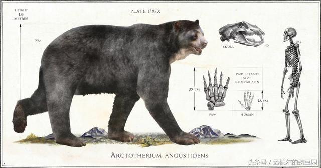 短面熊 巨型短面熊vs霸王龙