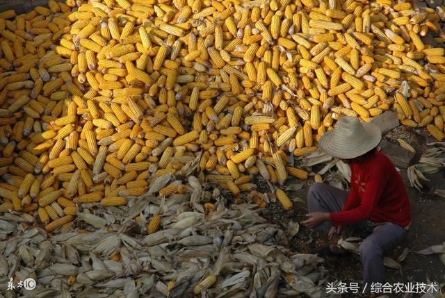 玉米价格又上调了,不知你手头还有要出售的玉米没有