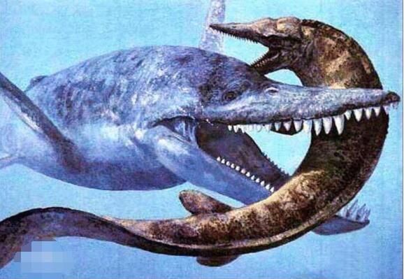 海洋食物链顶端动物【相关词_ 海洋食物链顶端】