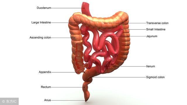 小肠镜能发现早期小肠肿瘤 医生建议三类人一