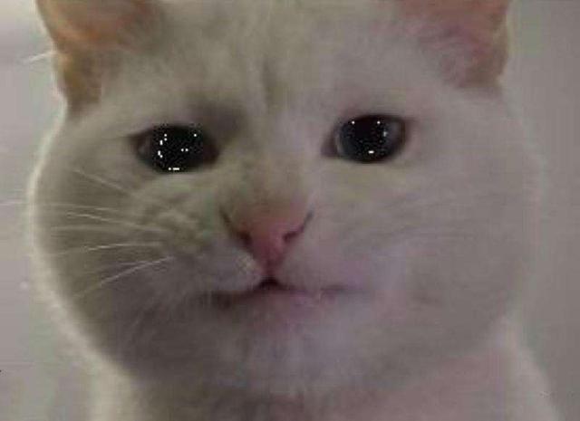 猫咪哭了,向猫咪道歉表情包小坨螺图片