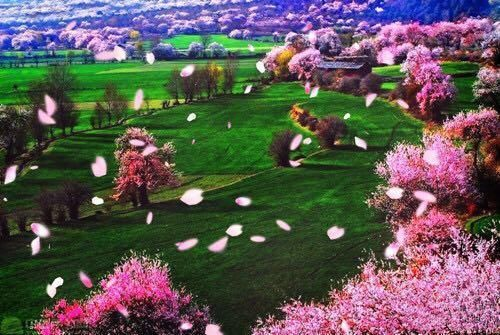 我在中国最美的春天等你!(第一记)西藏林芝