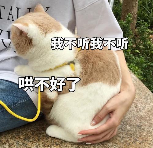 傲娇不好头像:生气了,哄表情的那种面猫咪表情包无动漫图片