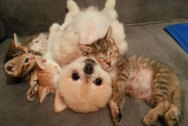 <b>主人善意领养14只宠物,不料惨遭疯狂拆家,哭诉猫狗双全的烦恼</b>