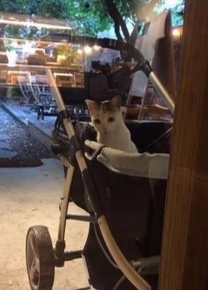 推车放在餐厅外两个小时,离开的时候发现,车里面长出一只猫主子