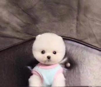 十二星座专属宠物狗,白羊座超可爱,金牛座的最忠心!