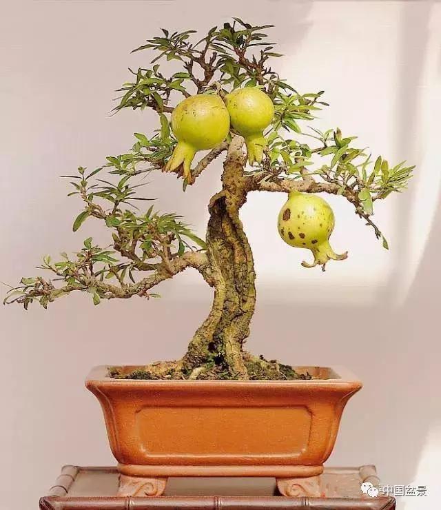 一组石榴石榴作品欣赏,情趣满枝,别具盆景!情趣用品怎样开网上在店图片