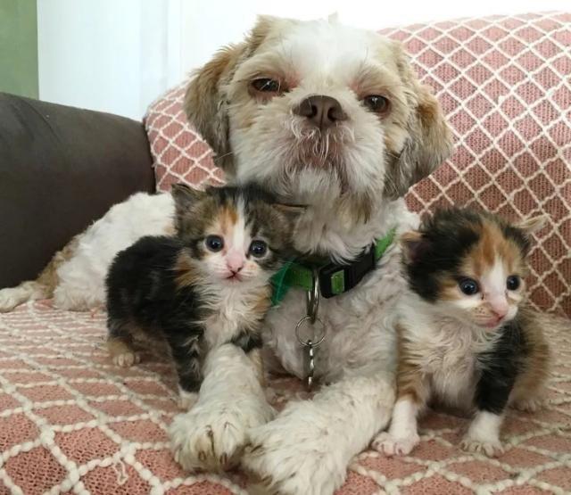 5岁狗狗因病差点去世,主人为了它辞职,如今它成了主人的好帮手