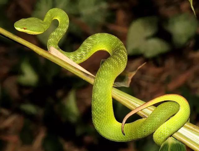 注意蛇出没!佛山三水女子搭瓜棚被竹叶青蛇咬伤,交警接力送医图片